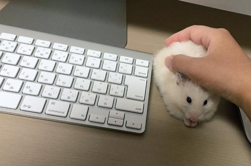 Перестала работать беспроводная мышка на ноутбуке что делать